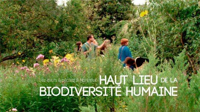 Les Murs à Pêches à Montreuil : haut lieu de la biodiversité humaine